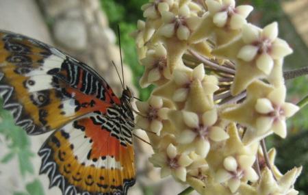 Cameron Highlands Butterfly Garden Image