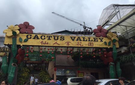 Cactus Valley Image