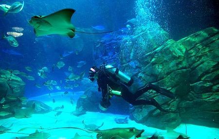 Ripley's Aquarium Of Canada Image