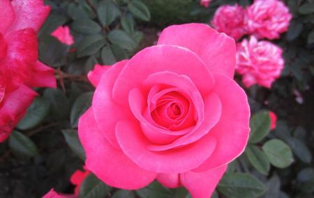 International Rose Test Garden Image