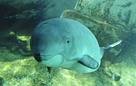 Vancouver Aquarium Image