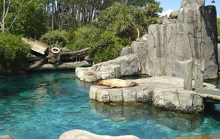 Auckland Zoo Image