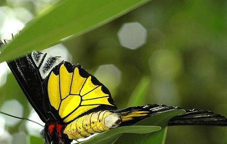 Butterfly Creek Image