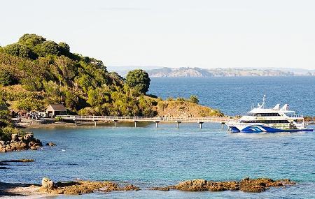 Tiritiri Matangi Island Image