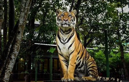 Tiger Kingdom Image