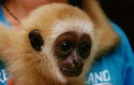 Gibbon Rehabilitation Project Image