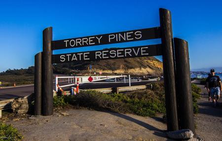 Torrey Pines State Natural Reserve Image
