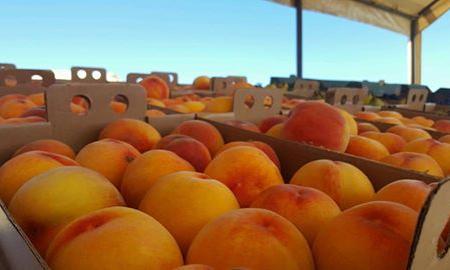 Sauvie Island Farms Image