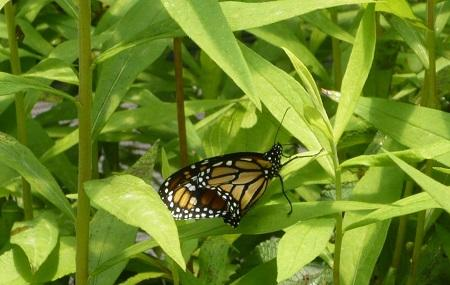 West Lynn Garden And Butterfly House Image