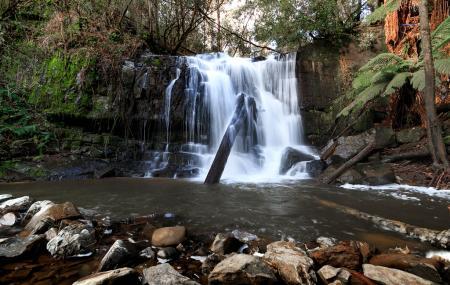 Lilydale Falls Image