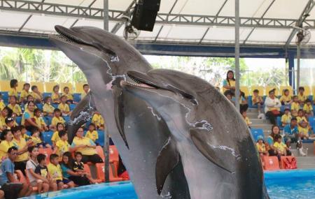 Dolphins Bay Nemo Phuket , Phuket
