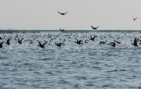 Nalabana Bird Sanctuary, Puri | Ticket Price | Timings