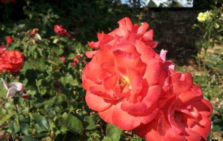 Peninsula Park And Rose Gardens Image