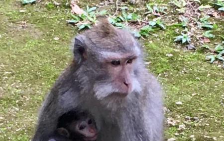 Sangeh Monkey Forest Image