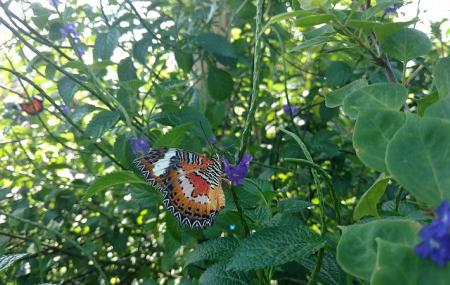 Kemenuh Butterfly Park Image