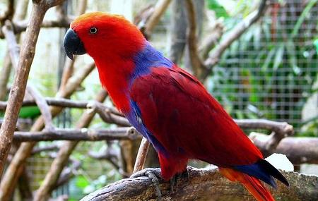 Bali Bird Park Image