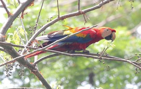 Carara National Park Image