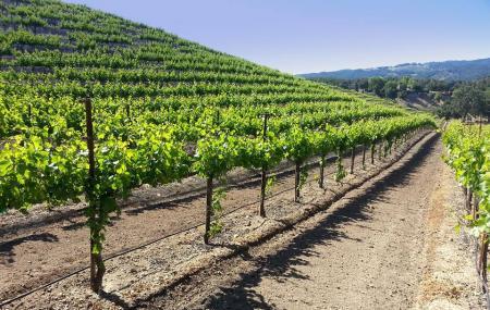 Croad Vineyards Image