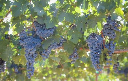 Le Vigne Winery Image