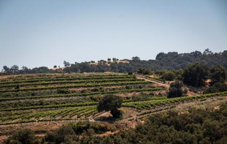 Calcareous Vineyard Image