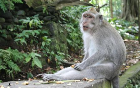 Monkey Forest Image