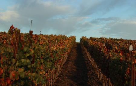 Niner Wine Estates Image