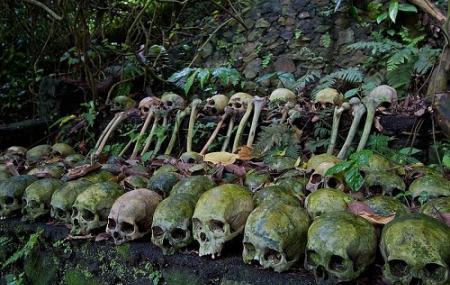 Trunyan Cemetery Image
