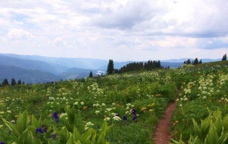 Cascade Creek Trail Image