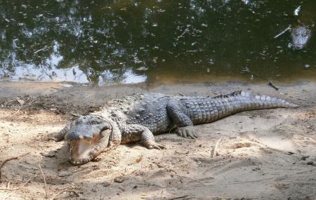 Madras Crocodile Bank Image