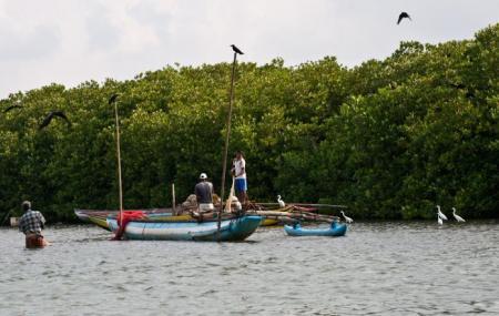 Muthurajawela Marsh Image