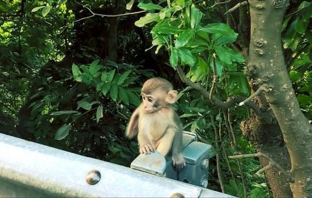 Monkey Hill Image