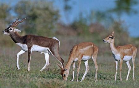 Mahavir Harina Vanasthali National Park Image