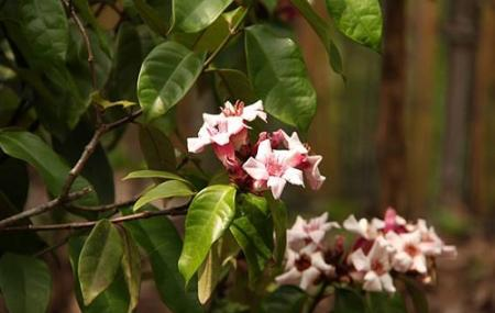 Pha Tad Ke Botanical Garden Image