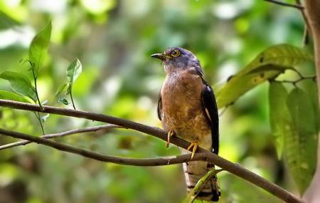 Chintamoni Kar Bird Sanctuary Image