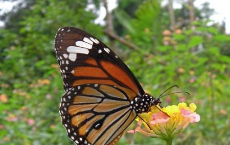 Kuang Si Falls Butterfly Park Image