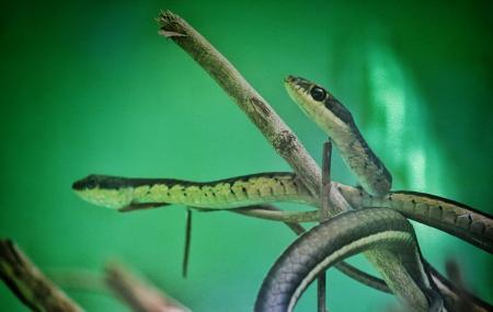 Chennai Snake Park Image