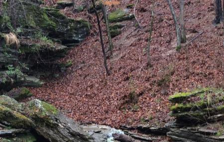 War Eagle Cavern Image
