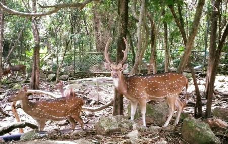 Songkhla Zoo Image