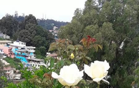 Rose Garden Image