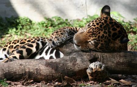 Ellen Trout Zoo Image