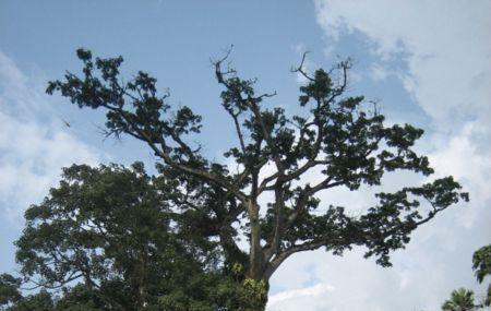 Aburi Botanical Gardens Image