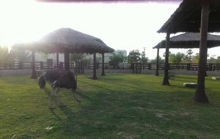 Al Khor Park Image