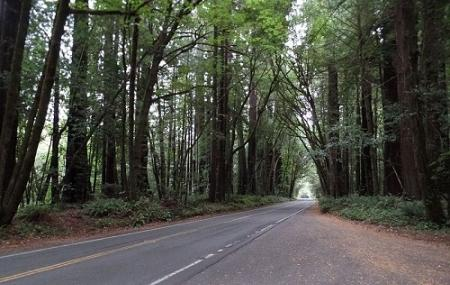 Avenue Of The Giants Forest Image