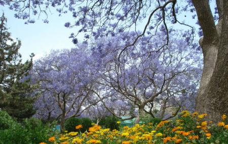 Abu Kheyal Park Abha Image