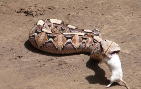 Meserani Snake Park Image