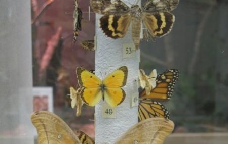 Georgia Museum-natural History Image