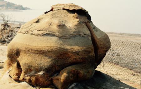 Kutch Fossil Park Image