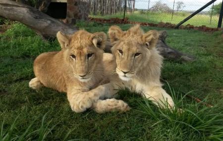 Kevin Richardson Wildlife Sanctuary (lionwhisperer) Image