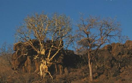 Mokolodi Nature Reserve Image