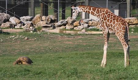 Frank Buck Zoo Image